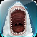 Dangerous Shark Bite